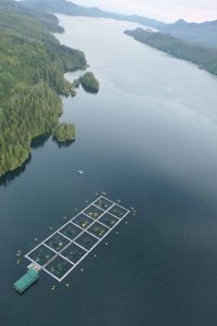 aerial Tofino BC Salmon farm lighting