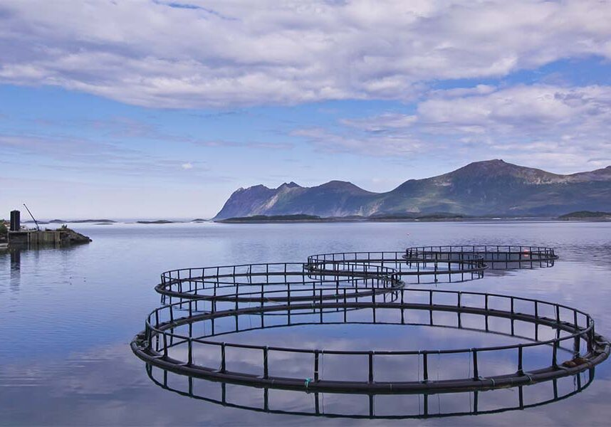 Sea pens aquaculture